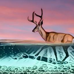 freetoedit ecunderwater underwater