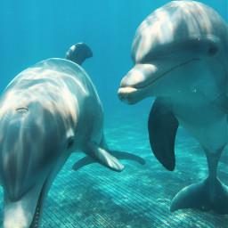 freetoedit dolphins interesting ocean friends