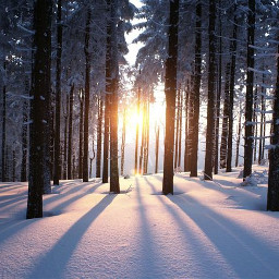 australia forest snow trees tree pcthebestplace