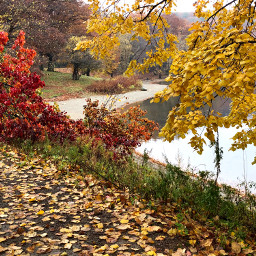 pcthebestplace thebestplace nature leaves fallcolors freetoedit