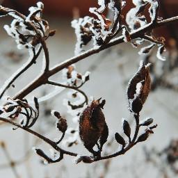 winter winterwonderland rime cold coldmorning