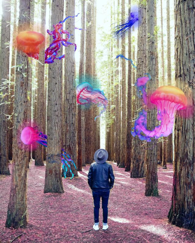 #freetoedit #forest #jellyfish #madewithpicsart #inspiration #mydesign