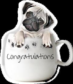 sccongrats congrats freetoedit congratulations puppy