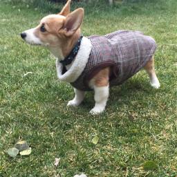 pcpetoutfit petoutfit pet dog jacket