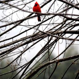 interesting birdsphotography winterscenes