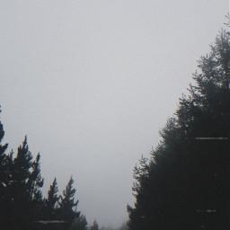 freetoedit sunday forest vhs vhseffect