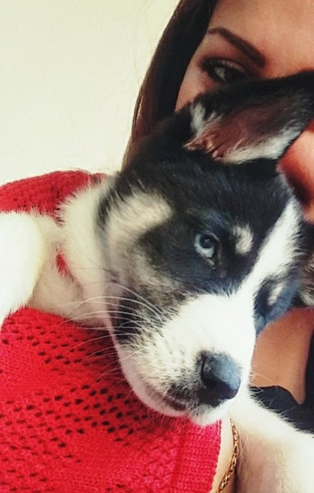 She absolutely loves taking selfies as you can see 😂😂😂  #myphotography #puppy #dog #husky #funny #petsandanimals #freetoedit