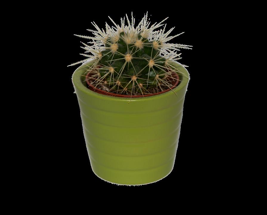 plant cactus green aesthetic tumblr