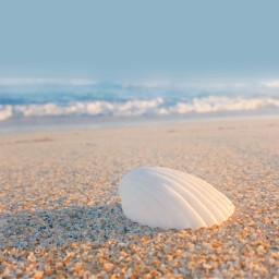 freetoedit nature beachscenery shell sunnylight