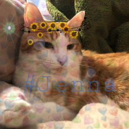 cat orangeandwhite freetoedit