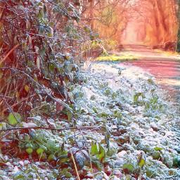 trees park letitsnowmagiceffect lighten myoriginalphoto freetoedit