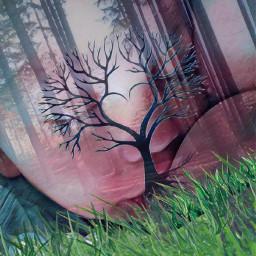 ectreeoflife treeoflife treeoflifechallenge nature beauty