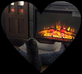 scfireplace fireplace freetoedit cat