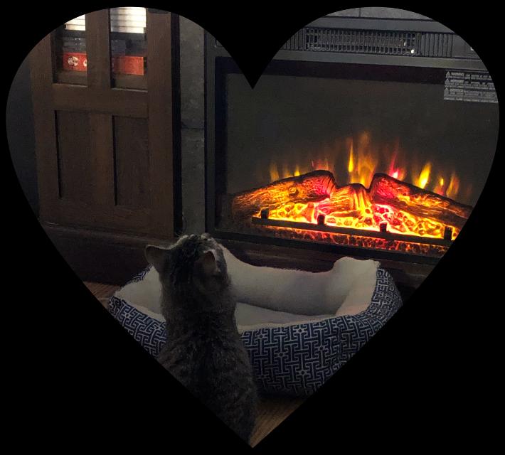 #freetoedit #fireplace #cat #freetoedit