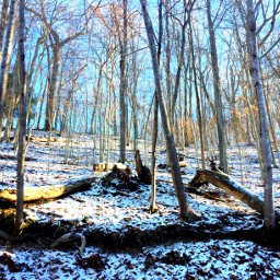 interesting winterscenes nature hikingtrails