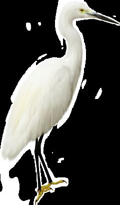 鸟 freetoedit