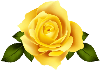 floral flower roses yellow yellowflower freetoedit