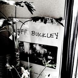 jeffbuckley sin_e