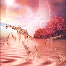 freetoedit vipshoutout fantasy giraffe