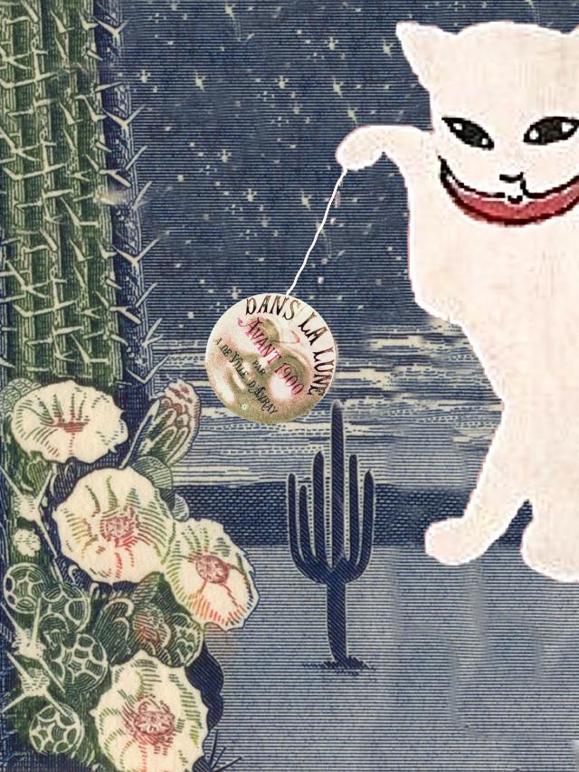 #kitty #moon #desert #cactus