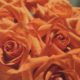 freetoedit thecolororange flowers roses bouquet