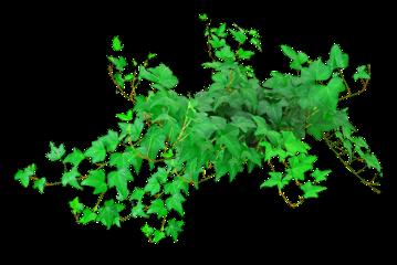 grass plants plant brunch leafs freetoedit