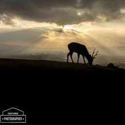 freetoedit deer sunset clouds follow