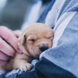 cute dog puppy love pet freetoedit