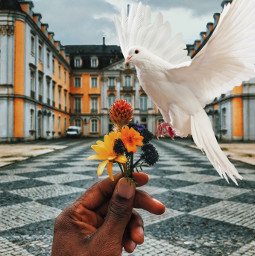 freetoedit editit bird flower