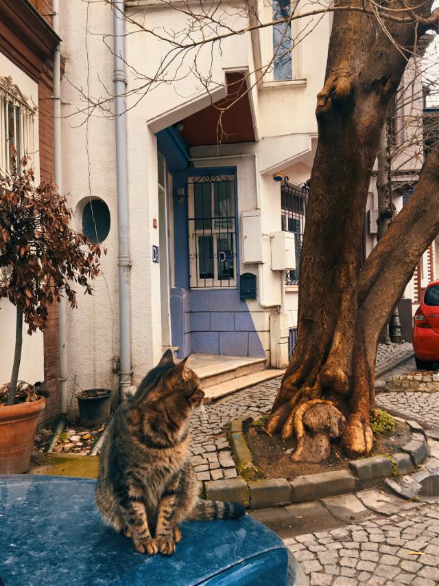Keyfi yerinde 🐈  #photography #photooftheday #picsart #picoftheday #travel #myedit #beautifulday #istanbul #turkey #objektifimden #cat #street #streetphotography #animals #interesting #freetoedit