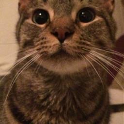 pcwindowstothesoul windowstothesoul soul freya kitty