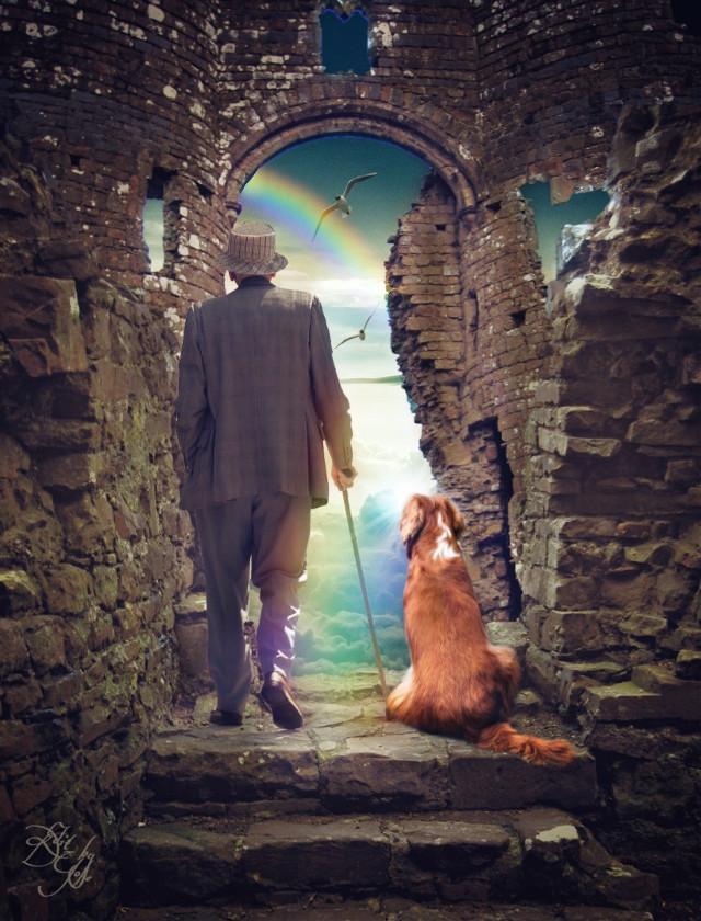 An elderly man escorts his beloved pet to rainbow bridge,  #freetoedit , #rainbowbridge