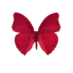 red vibrant moth butterfly aesthetic