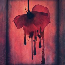 freetoedit rose blood frame papermask
