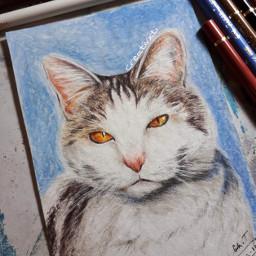 art drawing cat gift