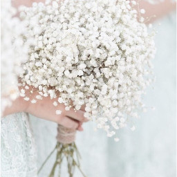 freetoedit babysbreath bouquet flowers bridal