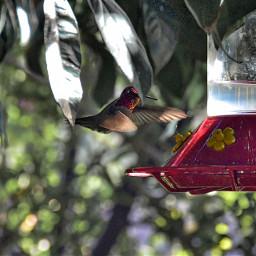 angeleyesimages landscapephotographer landscape hummingbird hummingbirds freetoedit