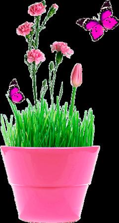 freetoedit butterfly flowerpot pink flowers