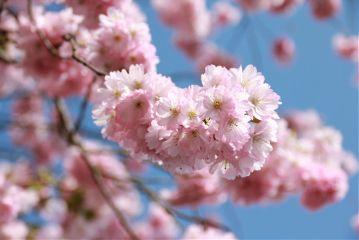 #origftespring,#catcuratedspring,#spring,#blossom