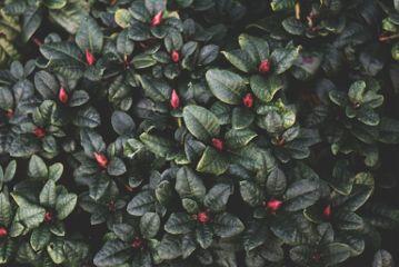 #catcuratedplants,#plant,#plants