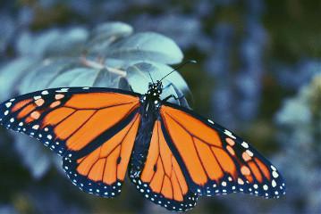 #catcuratedbutterfly,#butterfly