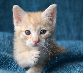#catcuratedcat,#origftecat,#catcuratedcats,#cat,#cats,#catsofpicsart