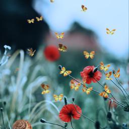 srcbutterflyeffect butterflyeffect freetoedit