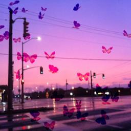 srcbutterflyeffect butterflyeffect freetoedit butterfly tumblr