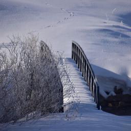 angeleyesimages snow winter bridge footsteps freetoedit
