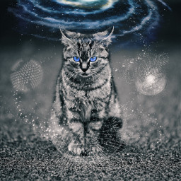 freetoedit befree space kitty galaxycat