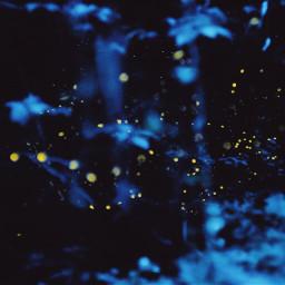forest darkforest cold fireflies night freetoedit