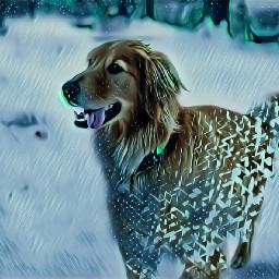 dog winter fur cute tongueout