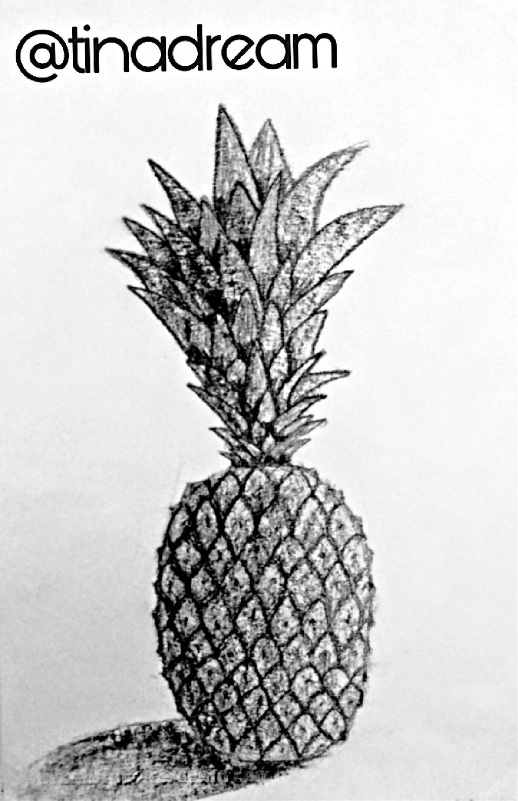 Ananas Dessin Image By Tinadream
