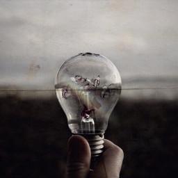 lightbulb freetoedit